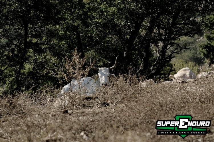 superenduro_2013_sprint_4_tolfa_mucca