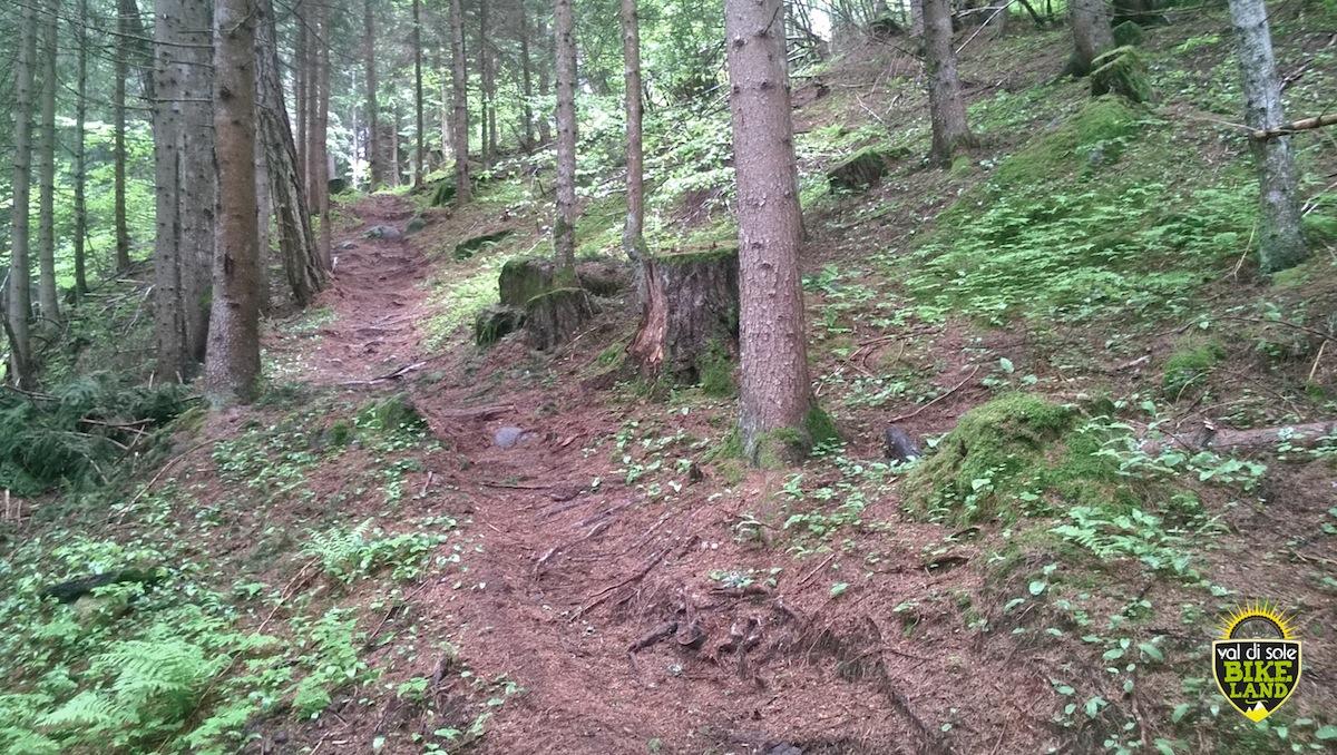 val_di_sole_downhill_tracciato_pista_2014_12