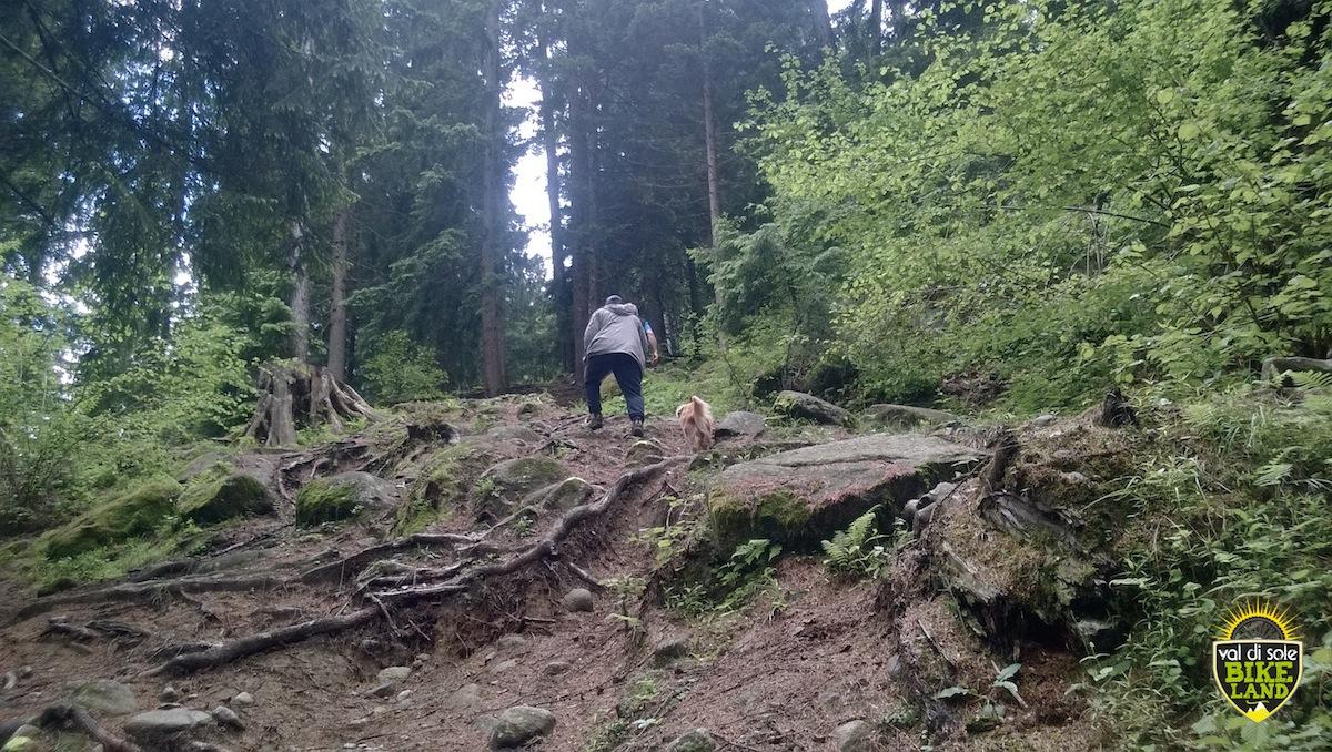val_di_sole_downhill_tracciato_pista_2014_14