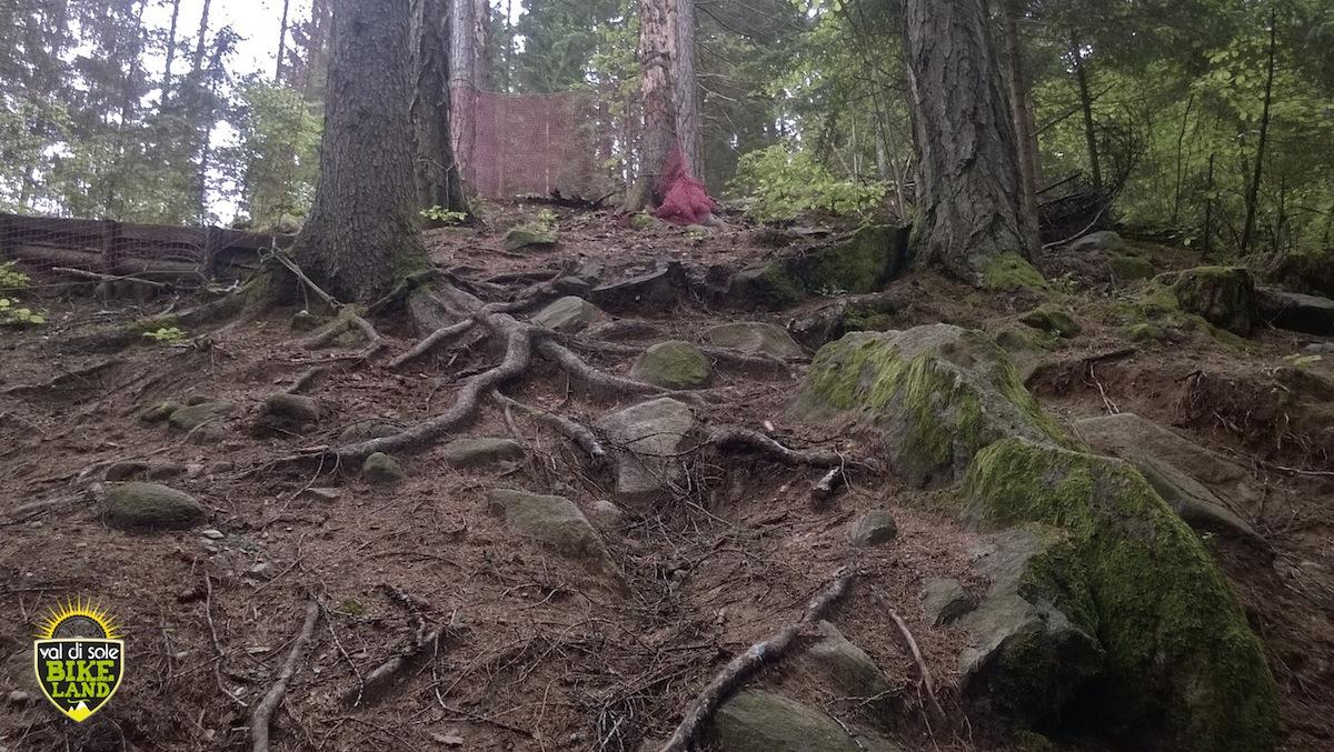 val_di_sole_downhill_tracciato_pista_2014_16
