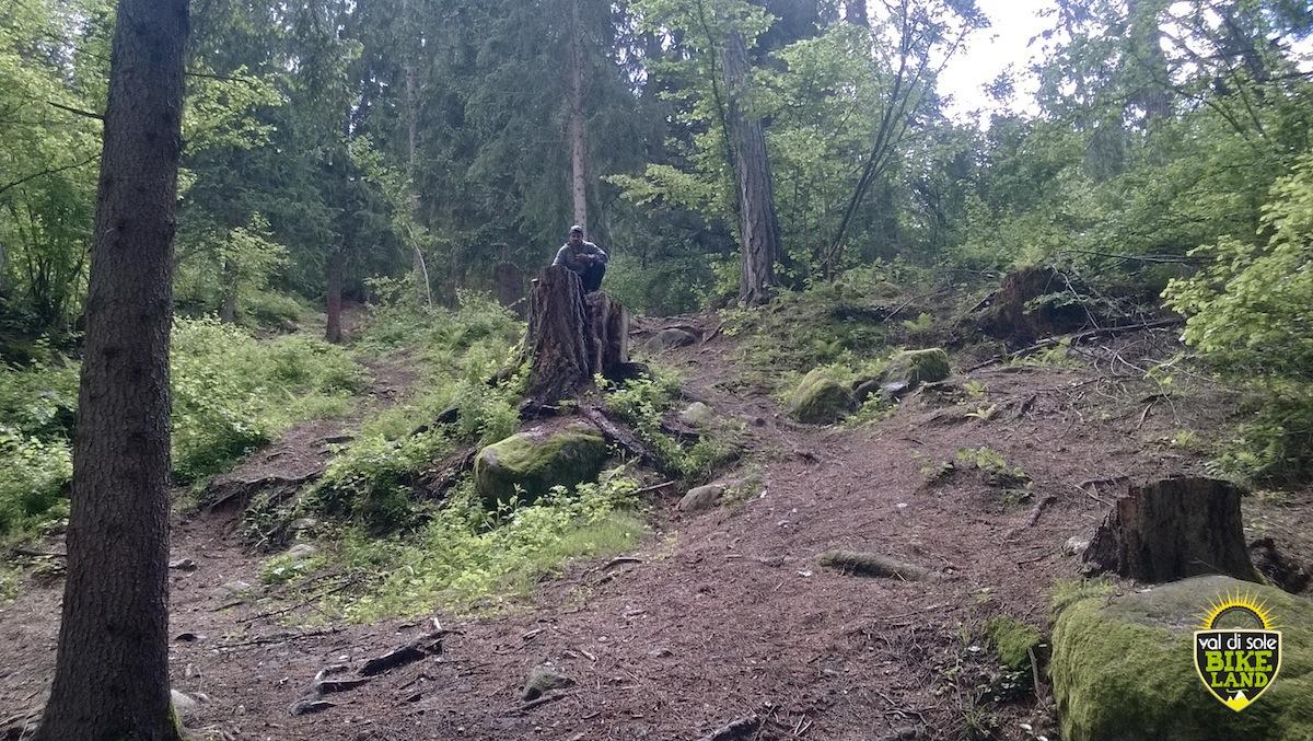 val_di_sole_downhill_tracciato_pista_2014_17